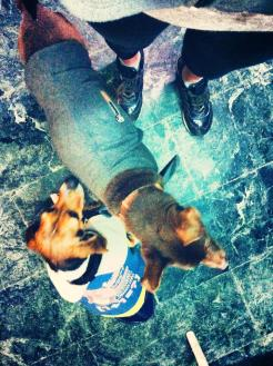 dogwalk2